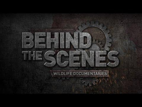Wildlife Documentaries: Behind the Scenes - Series Trailer