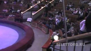 видео цирка вернадского