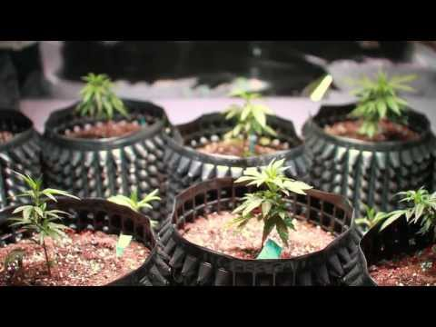 Modern Growers: Grow Along Week 1- Kind LED Grow Lights