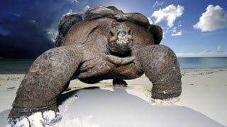 Смешные животные 2016. Верхом на черепахе. подборка под хорошую музыку.