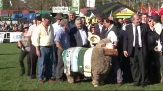 Mujica premió a grandes campeones Hereford, Corriedale, Braford y Merino Australiano
