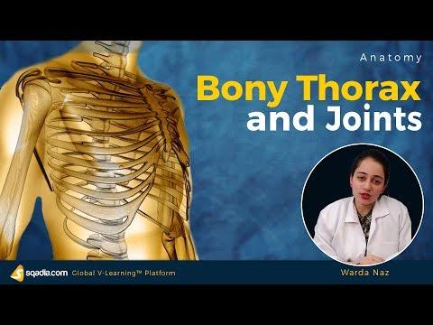 Bony Thorax And Joints | Medical School Anatomy | V-Learning | Sqadia.com