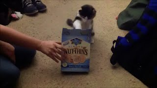 Kichi The Cat's Review: Blue Diamond Almond Nut Thins