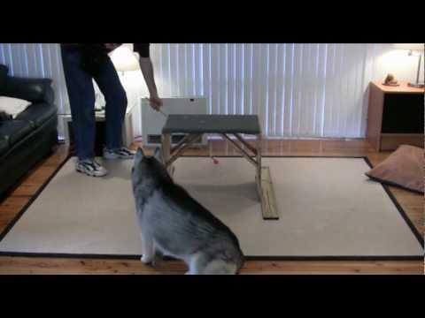 Dog Training - Shaping a New Complex Behaviour in a Siberian Husky - Ashaki