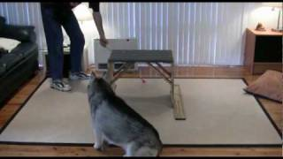 Dog Training - Shaping A New Complex Behaviour In A Siberian Husky - Ashaki