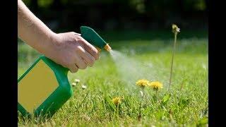 видео Как избавиться от сорняков с помощью уксуса: народные рецепты