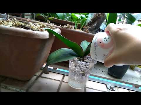 48款可挑魔晶球50公克魔晶土 大顆香晶球 水晶泥 水晶寶寶 水晶土 水晶球 水耕彩色土壤養魚缸造景