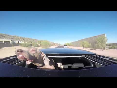 Hund hält Kopf auf der Autobahn aus dem Dachfenster