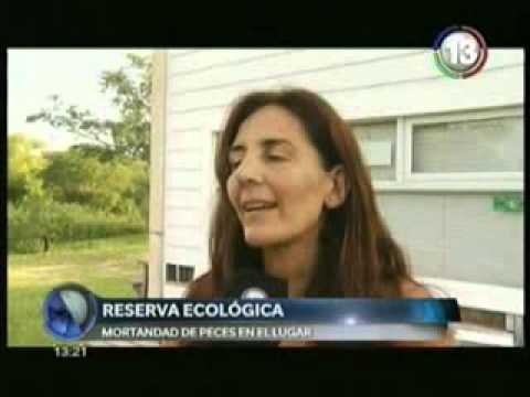 preocupa la aparicion de peces muertos en la reserva ecologica