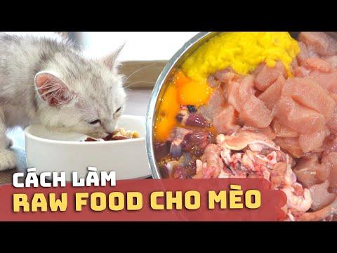 Cách Làm RAW FOOD CHO MÈO 😸🥩 | Raw Food Cho Mèo Là Gì? | Có Nên Cho Mèo Ăn Raw Food?