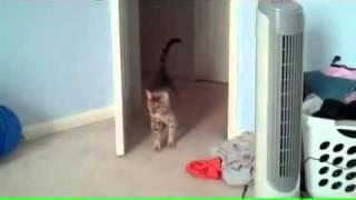 Смешной испуг кота  кот испугался  смешное видео с котом прикол с кошкой приколы 2014  ghbrjks!