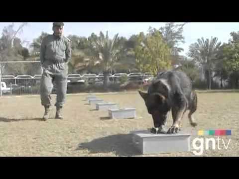 Dubai   Police Dog training