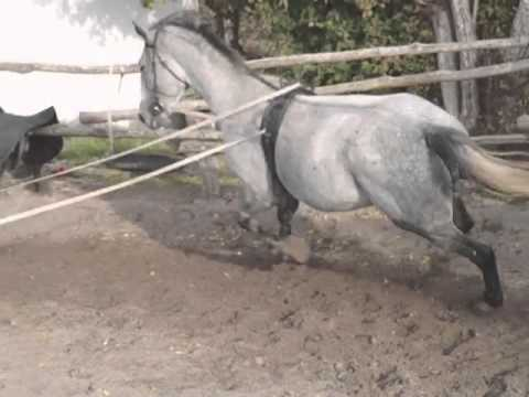 Eladó lovak Kelebián 8. - YouTube