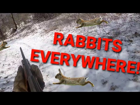 Rabbit Hunting with Beagles in Southwest VA. Rabbits were everywhere! (Running rabbits on ice)