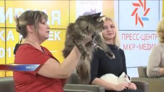 В Омске пройдет всемирная выставка кошек