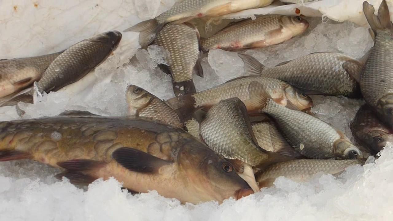 Рыбалка Зима 2017 Ловим карасиков на пруду в Белгородской области  04.01.2017