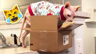 Cat Fails Try Not To Laugh l FUNNY CATS FAILS COMPILATION