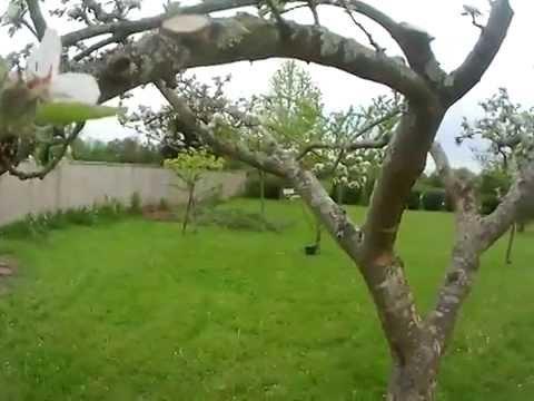 comment tailler un abricotier un cerisier un prunier doovi. Black Bedroom Furniture Sets. Home Design Ideas
