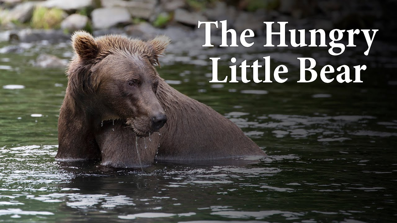 The Hungry 🐻 Little Bear
