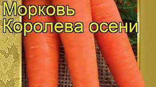 видео Морковь Королева осени, описание сорта, отзывы, характеристика | Ягодный сад, или прикладное садоводство в советах, вопросах и ответах