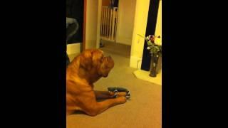 Frank The Dog Sings Alicia Keys
