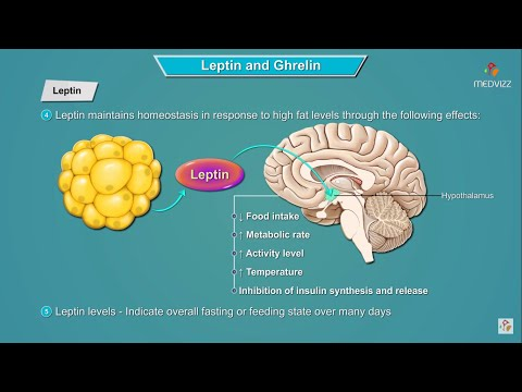 Leptin and Ghrelin hormones mechanism of action