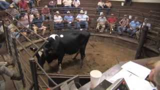 Third-Generation Stockyard & Auction Benefits Local Producers