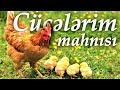 AY MENIM CUCELERIM CIP CIP CUCELERIM mp3