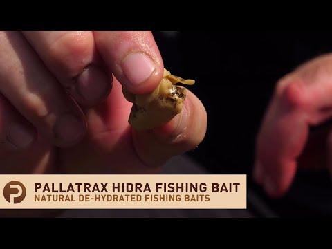 Pallatrax Hidra Natural Fishing Baits - De-hydrated Snails