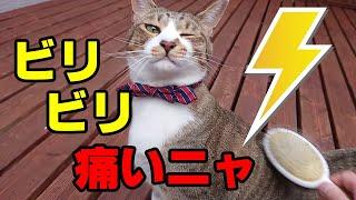 猫が静電気でビリッと感電して驚く映像!