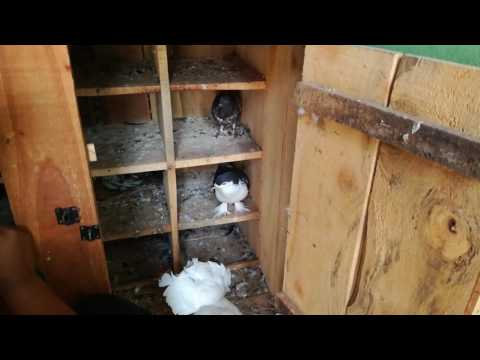 Pigeon house | Measurement of pigeon house | kobutorer ghor porimup