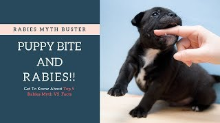 Puppy Bite Cause Rabies | Top 5 Rabies Myths & Facts - Busted (Hindi)