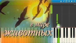 Музыка из телепередачи 'В Мире Животных' (на пианино Synthesia)