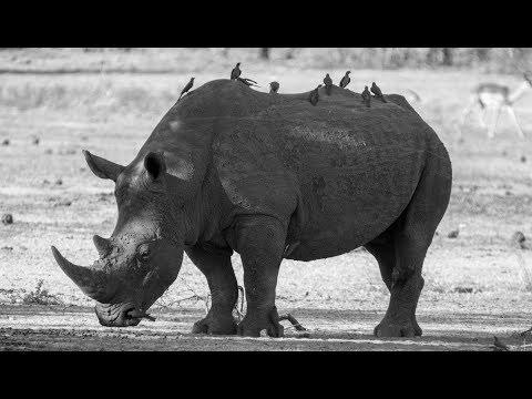 Make Rhino Horn Legal - S02E013