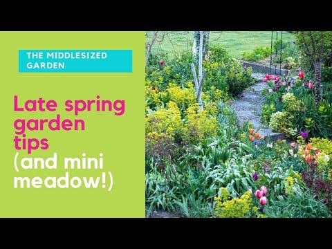 Late spring garden tour & tips – plus what to do now for a mini meadow!