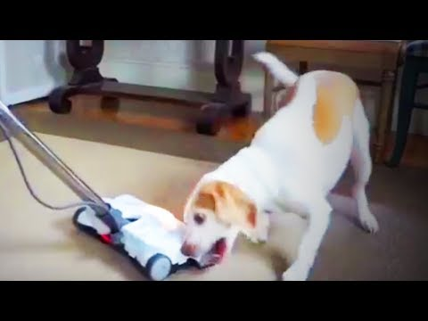Awesome Dogs  🐶 😍 Funny Amusing Dogs (Part 2) [Funny Pets]