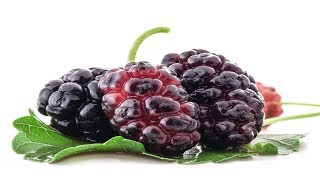 Home Remedies|Amazing Health Benefits of Mulberry Fruit|Health Tips