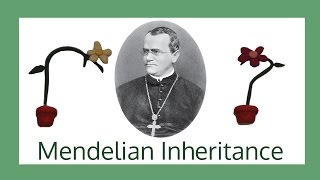 Mendelian Inheritance - Breakthrough Junior Challenge 2016