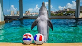 nicholas-the-dolphin-picks-world-cup-winner-france-vs-croatia