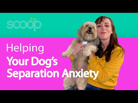 Helping Your Dog with Separation Anxiety | The Scoop