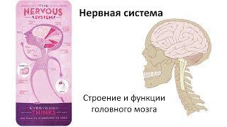 4.3 Нервная система часть ГМ (8 класс) - биология, подготовка к ЕГЭ и ОГЭ 2019