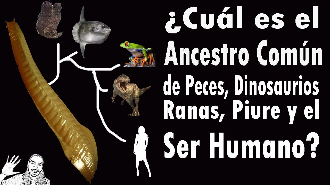 ¿Ancestro de Dinosaurios, Peces y Humanos? | #AbrilVideosMil | 19