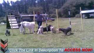 Dog Training Collars And Training Dogs