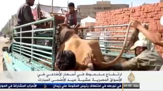 أسعار الأضاحي في الأسواق المصرية