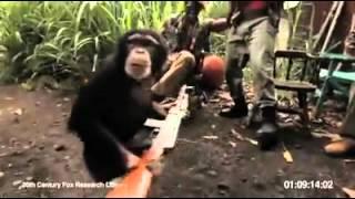 Maymuna s avtomat