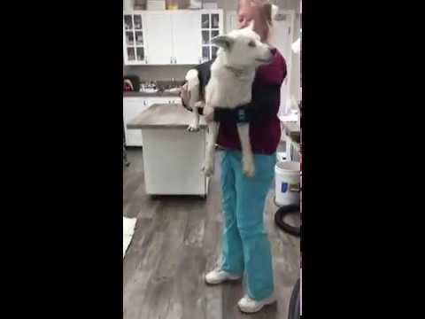 Lifting Large Dog