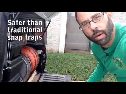 Rat and Mice Rodent Control Miami NaturePest 786-222-7069
