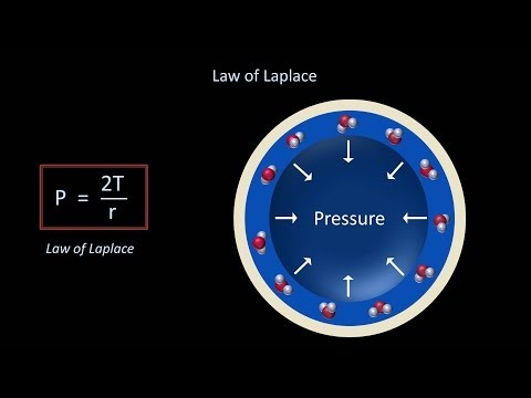 Surface Tension and Surfactant (Fluid Mechanics - Lesson 12)