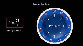 Surface Tension and Surfactant (Fluid Mechanics - Lesson 12)