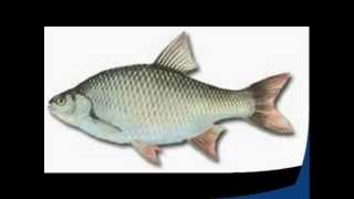 Wymiary,Okresy i Limity Ochronne Ryb